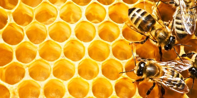 fagure cu albine